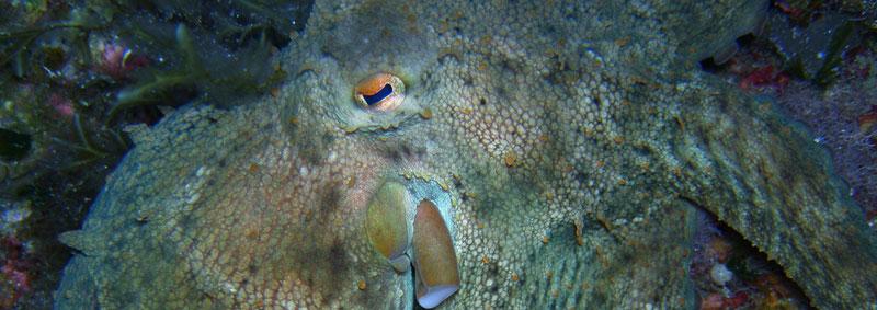 Immersioni in sicilia punta castagna lipari secca del - Formiche in bagno ...
